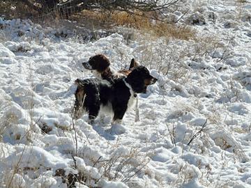 Gila Wilderness winter snow