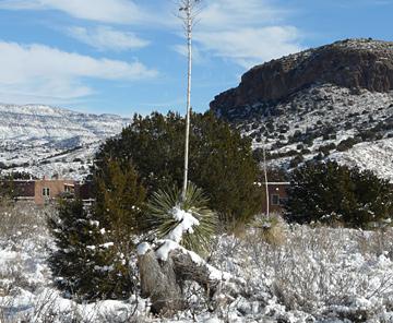 Gila Wilderness snow