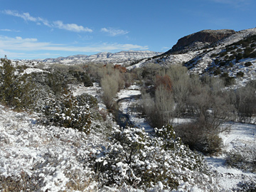 Snow on Bear Creek