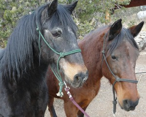 mexican horses at Casitas de Gila