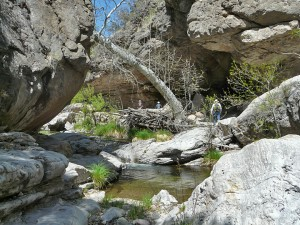 Turkey Creek, New Mexico