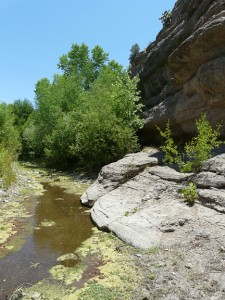 Bear Creek in Southwest New Mexico