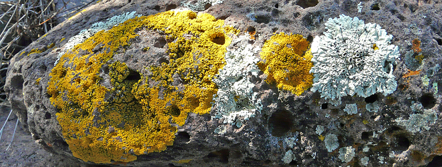 Lichens in Southwest New Mexico's Gila Wilderness Area ...