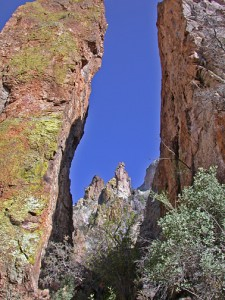 Lichen-Covered Pillars of Cooney Tuff