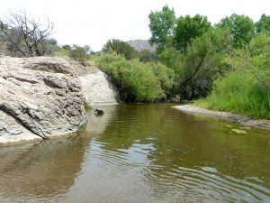 Swimming Hole in Gila River near Silver City, NM