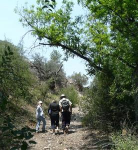 gila river hike, new mexico
