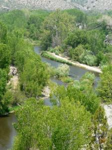 Gila River Riparian Preserve