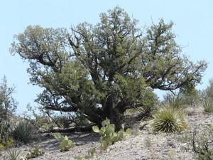 plants in the Gila Riparian Preserve