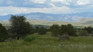 Mule Creek Country