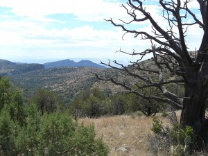 Mule Creek Country, New Mexico