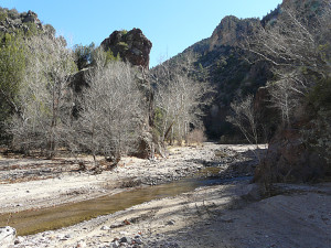 Sycamores and towering volcanic cliffs just downstream from confluence of Little Dry Creek and Big Dry Creek