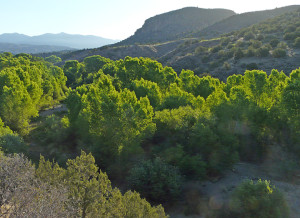 June morning light on Gila Wilderness