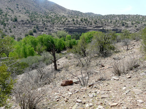 East-facing hillside in foreground showing Honey Mesquite Catclaw and Scrub Oak completely stripped of foliage, plus complete destruction of all the vegetative ground cover.