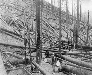 Severe burn in a heavy stand of Idaho White Pine on the Little North Fork of the St. Joe River, Coeur d'Alene, Idaho, 1910.