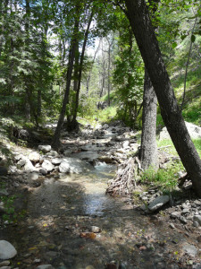 A short distance further up the same creek, the forest is untouched and remains in pristine condition.