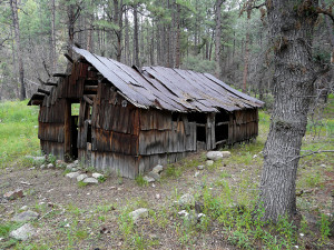 During forest fires in the Gila National Forest, firefighters will, wherever possible, protect historic structures such as this old miner's cabin by wrapping them in fire retardant material.