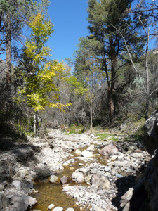 Gila Wilderness New Mexico