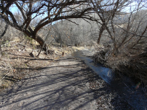 Gila National Forest Winter Solstice