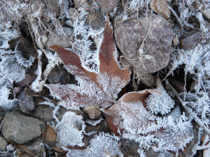 winter leaves in the Gila