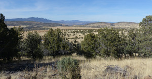 cattle grazing land New Mexico