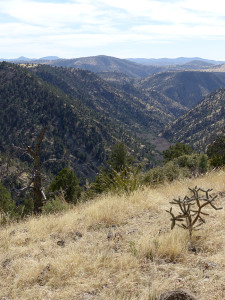 Lower Big Pine Canyon New Mexico
