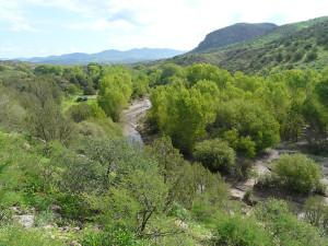 Bear Creek 2013