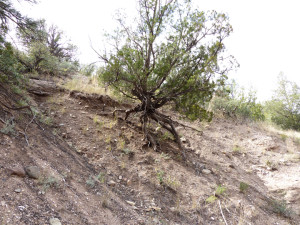dry wash canyon