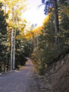 douglas fir and quaking aspen