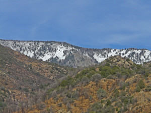spruce and fir gila wilderness