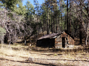 hiking in the gila national forest