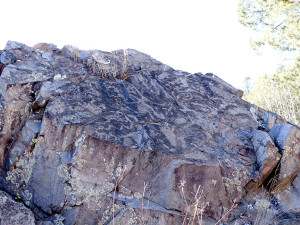 petroglyphs in Gila Forest