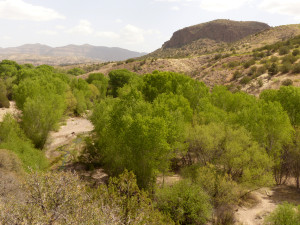 gila wilderness spring