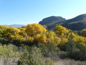 cottonwoods in southwest new mexico