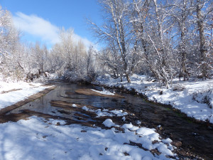 Frozen creek new mexico