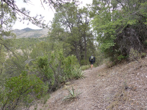 Sheridan Corral Trail in Gila Forest