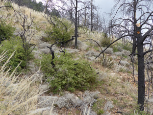 hiking in Gila National Forest