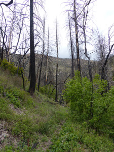 hiking in southwest New Mexico