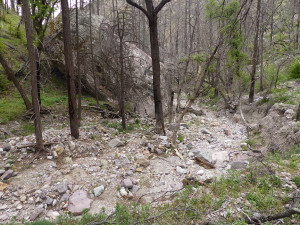 Holt Apache Trail New Mexico