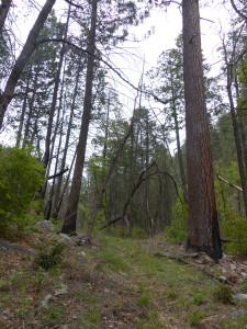 Sheridan Corral Trail New Mexico