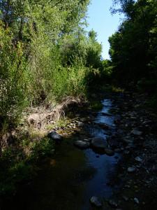 Bear Creek New Mexico