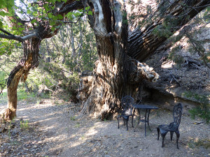 hiking trails in the gila