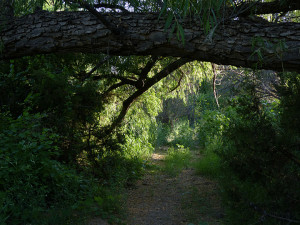 trails at Casitas de Gila