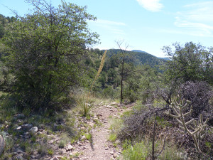 vegetation in the gila national forest
