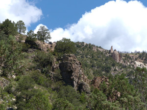 edible plants in the gila wilderness
