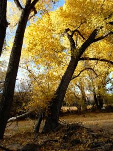 Bear Creek fall color
