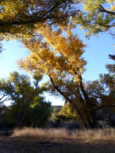 fall color at Casitas de Gila