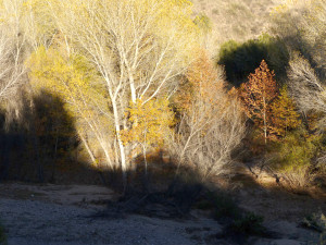fall color along Bear Creek near Silver City