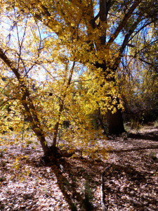 fall color along Bear Creek near Silver City