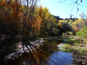 early morning light on Bear Creek in New Mexico