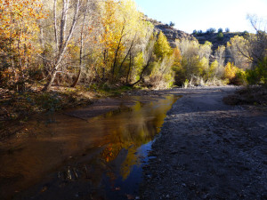 late afternoon light on Bear Creek in New Mexico